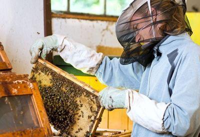 Facharbeiter_Bienenwirtschaft Lehrberuf