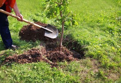 Facharbeiter_in_Forstgarten_580933222 - FacharbeiterIn Forstgarten- und Forstpflegewirtschaft