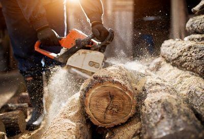 Facharbeiter_in_Forstwirtschaft_726582142 - FacharbeiterIn Forstwirtschaft