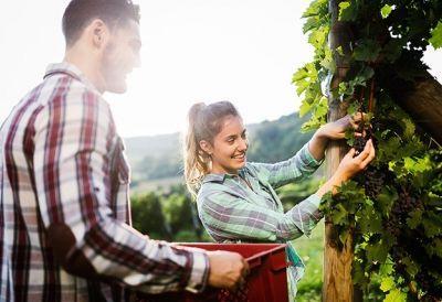 Facharbeiter_in_Obstanbau_Verwertung_578903485 - FacharbeiterIn Obstbau und Obstverwertung