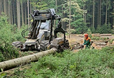 Forsttechniker_784619926 - Forsttechniker/in